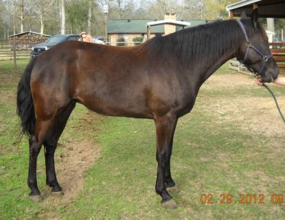 AQHA, APHA & A few other breeds of horses for sale - Please Cont
