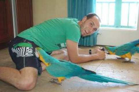 Home raised Macaw birds available