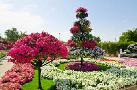 تهيئة الحديقة باجود انواع العشب الطبيعي والورود