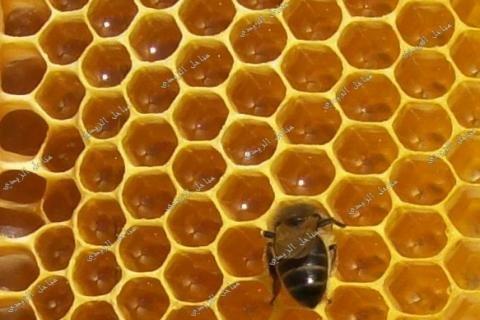 بيع عسل النحل الخالــــص