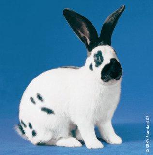 بيع أرانب بكل الأنواع