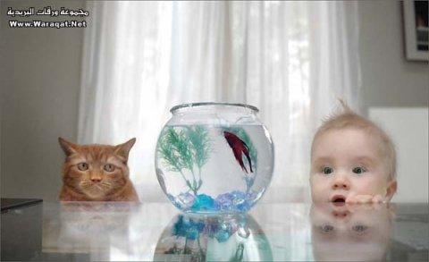 ابحث عن قطة حلوة رومانسية