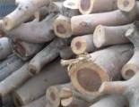 خشب  وحطب  للاشجار
