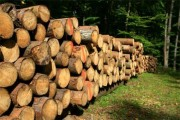 حطب وخشب