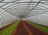 vante serre agricole